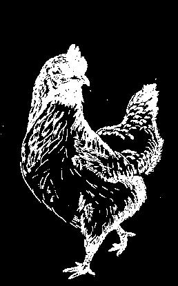 coquette-la-pouletterie